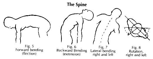 A gerinc mozgásai