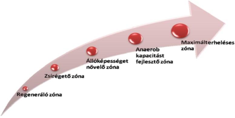 kardio edzéshez tartozó pulzus célzónák